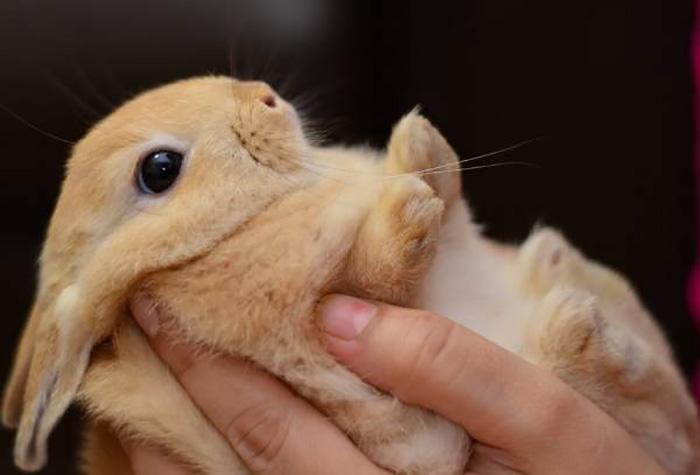 Врач Мэри описал случай, как ему пришлось принять роды,  в результате которых появилась целая дюжина кроликов.